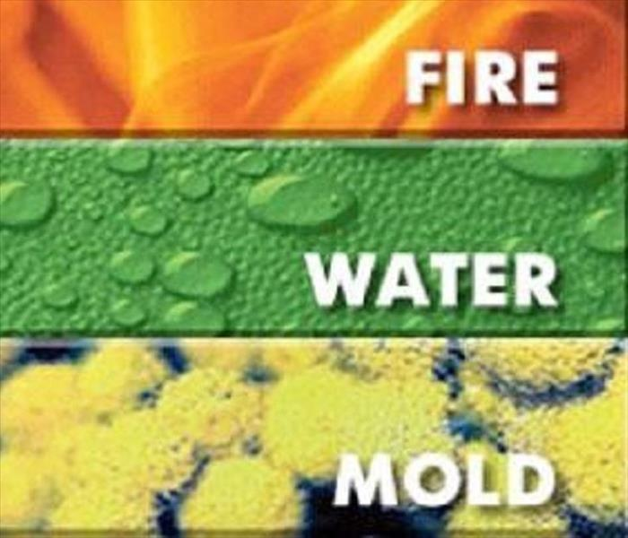 "Mold Remediation Mold can't just be "" Spring Cleaned Away""."