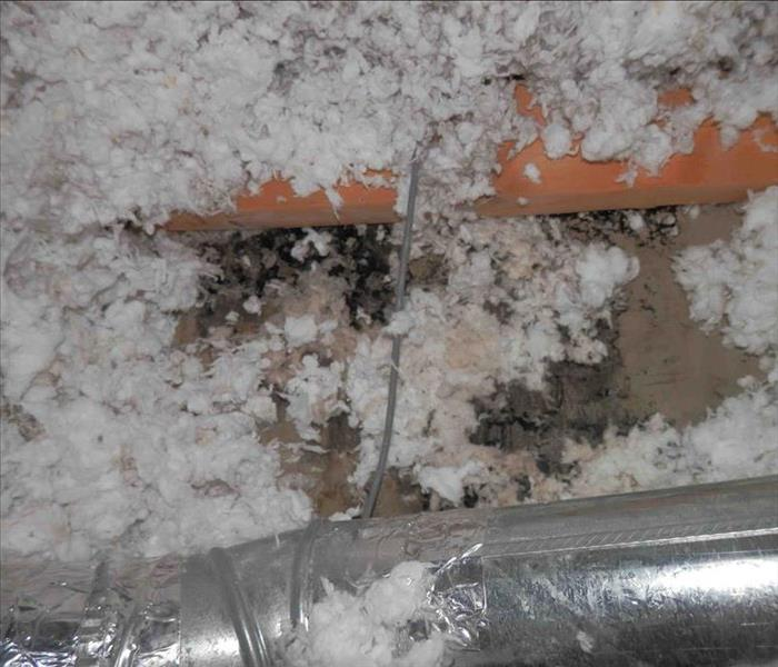 Mold Remediation Who S Afraid Of The Bad